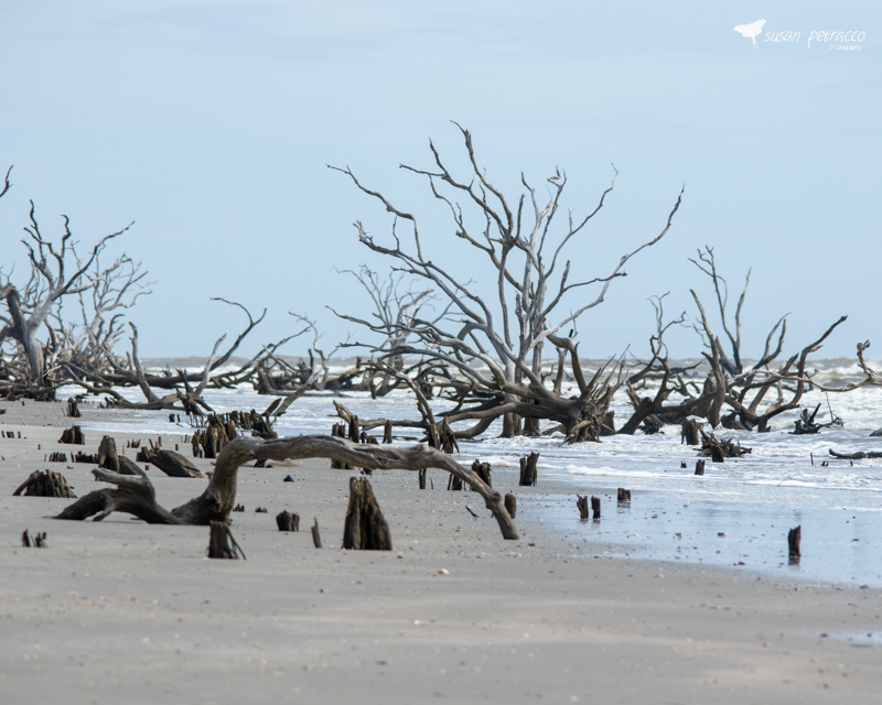The Boneyard at Bulls Island